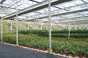 Kolen Tomar  - Brugge - Industrie et horticulture
