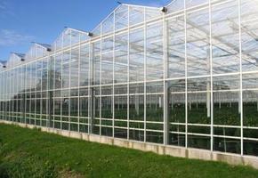 Kolen Tomar   - Industrie & Tuinbouw
